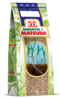 Brachiaria Marandú