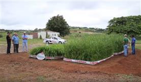 Demonstração das cultivares Paredão e Braúna para produtores da Bahia