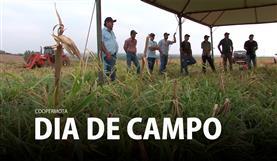 Dia de Campo - Coopermota