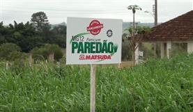 Dia de Campo em Patos de Minas (Novas cultivares Matsuda)