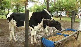 Dia de Campo Estância IL (leite)