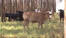 Dia de Campo - Fazenda Lorusso