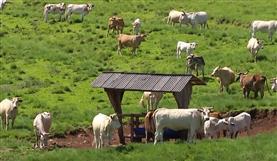 Fazenda Amanélio Piovesan