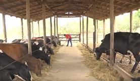 Fazenda Santa Maria - Fós Leite e Top Milk Núcleo