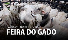 Feira do gado - BA