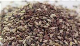 Pureza das sementes (Porteira Adentro)