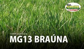 Vantagens da MG13 Braúna