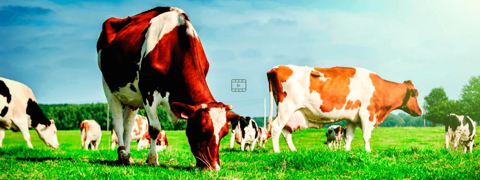 Saúde Animal - Produtos